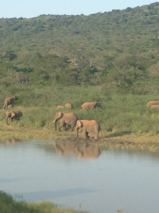 The elephant family that chased us out of Akagera National Park!
